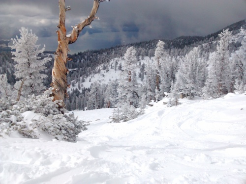 Fresh powder at Heavenly with Lake Tahoe in the background